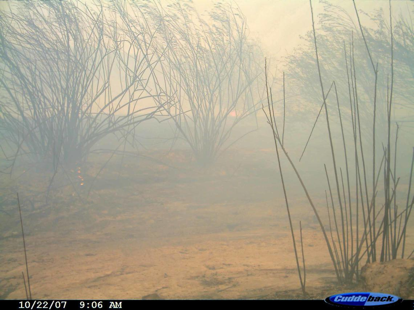 fire burns streamside shrubs
