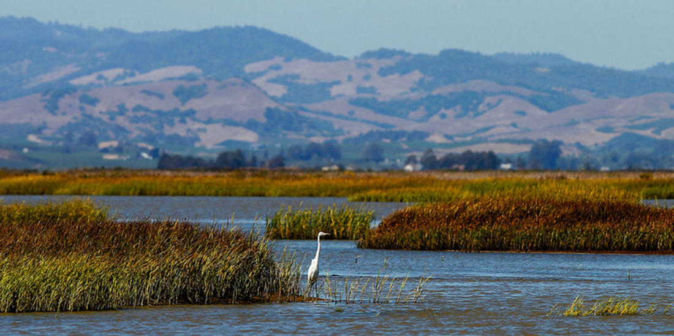 Estuary and bird