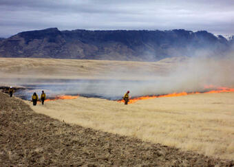 Izzenhood prescribed burn to remove cheatgrass